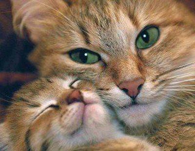 دانلود کلیپ نبرد گربه ها